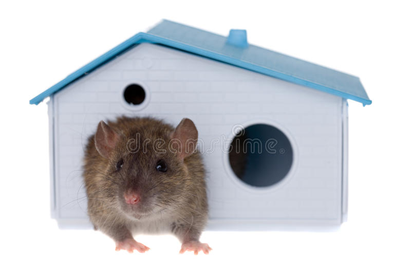 My house stock image