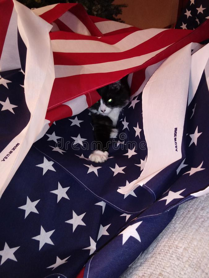 My kitten. Kitten my sitting american flag stock image