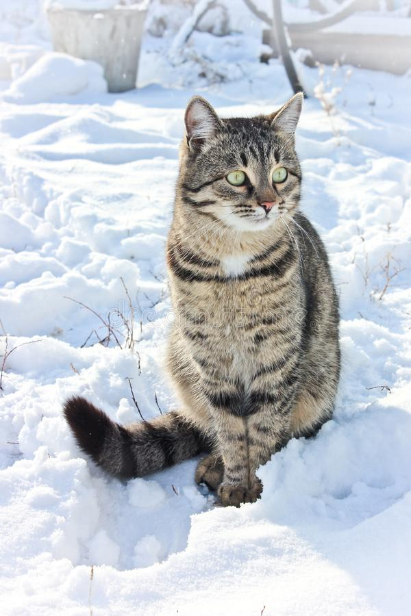 My kitten in snow royalty free stock photos