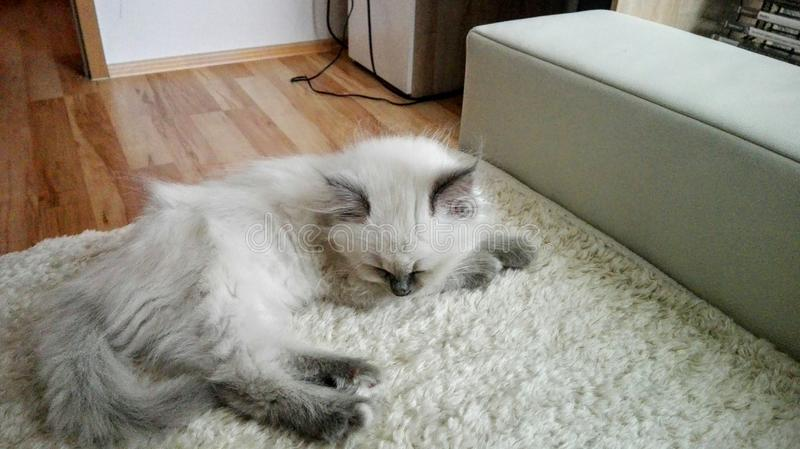 My little cat. Sleeping stock images