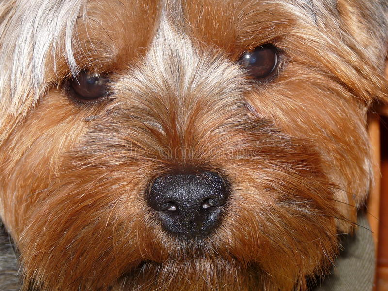 My little dog stock photo