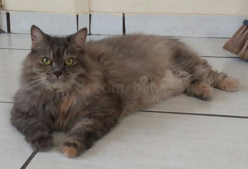My Pet. This is the most beautiful cat , and its always posin and i dont i think maybe it could be cute stock photography