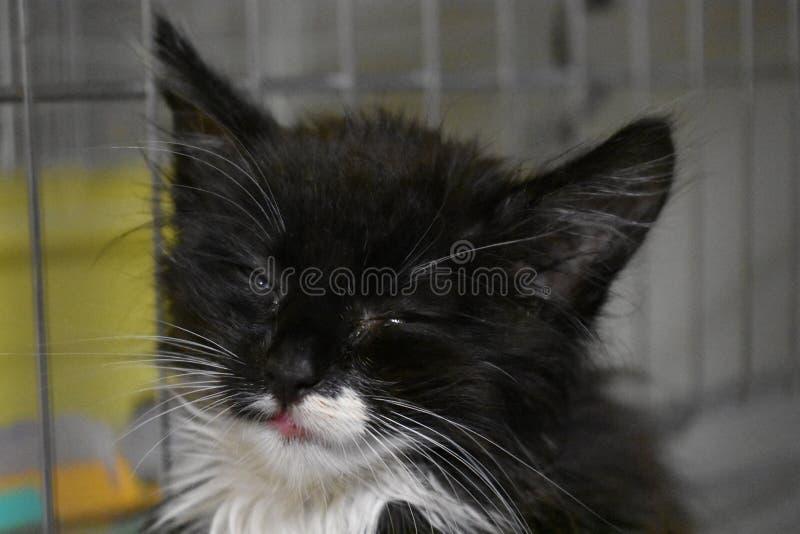My pretty kitty stock photos