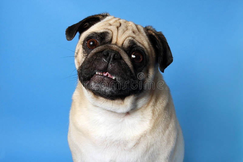 This Is My Pretty Side royalty free stock photo