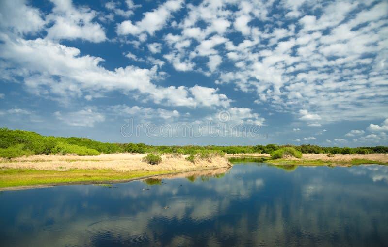 Myakka-Fluss Florida lizenzfreie stockbilder