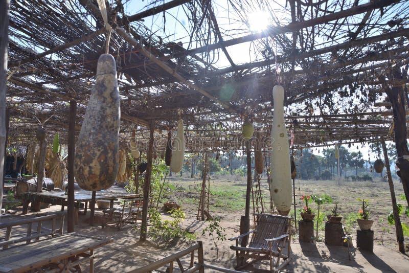 Myanmar melonowy owocowy uprawiać ziemię fotografia stock