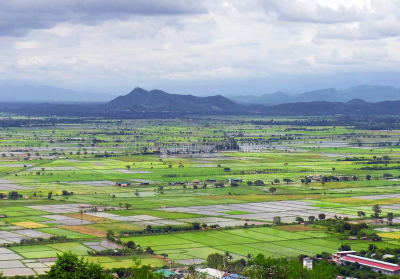 Myanmar Rice Fields. View of rice fields in Myanmar royalty free stock photography