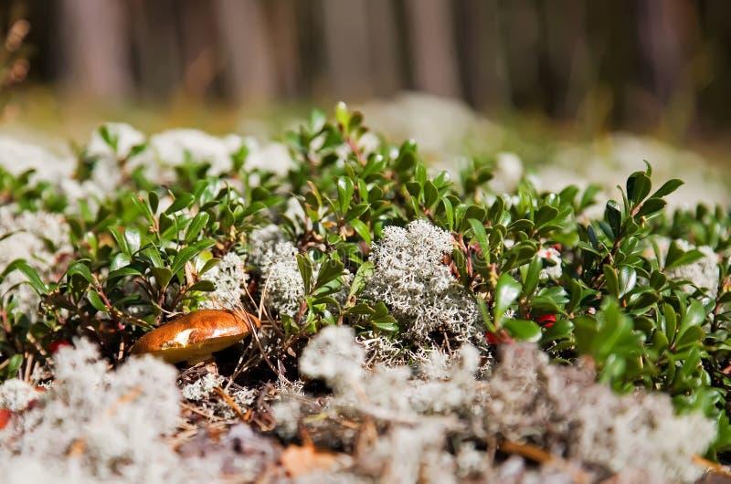 Mycète dans la forêt photos libres de droits