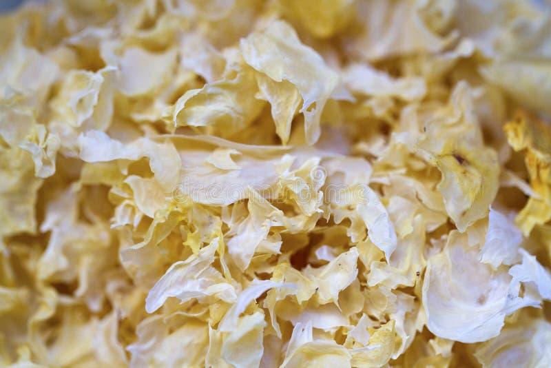 Mycète de neige, médecine de fines herbes de chinois traditionnel photo stock
