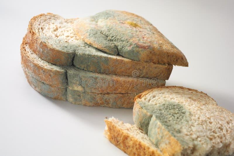 Mycète sur le pain photo stock