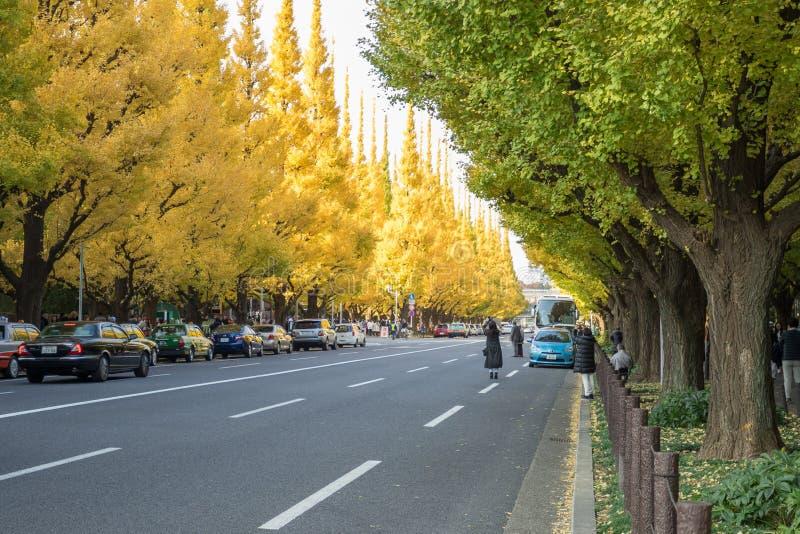 Mycket bil på vägen under ginkgoträd på den Icho Namiki avenyn royaltyfri foto