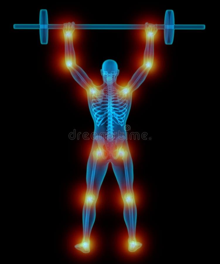 Mycket detaljerad och medically exakt illustration 3D av lyftande vikter för en genomskinlig man stock illustrationer