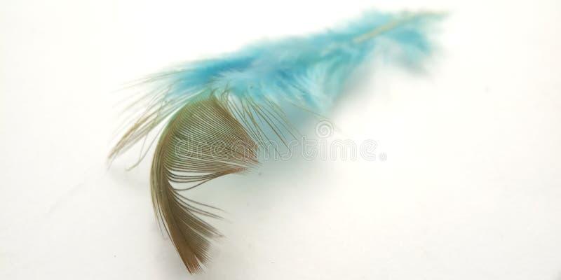 Mycket enkel begreppsmässig makro, svart blå fjäder på vitt, Representating av Softness, försiktigt och ljust arkivfoton