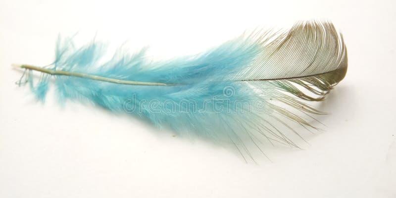 Mycket enkel begreppsmässig makro, svart blå fjäder på vitt, Representating av Softness, försiktigt och ljust arkivfoto