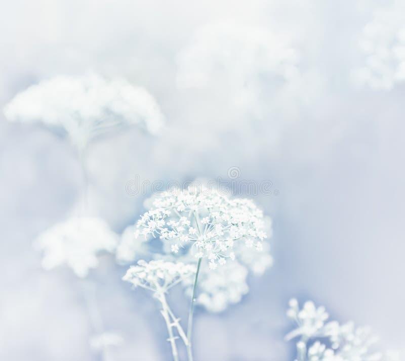 Mycket försiktiga vita blommor i ängen Konstnärligt foto, mjuka pastellfärgade färger Selektiv mycket mjuk fokus arkivfoton