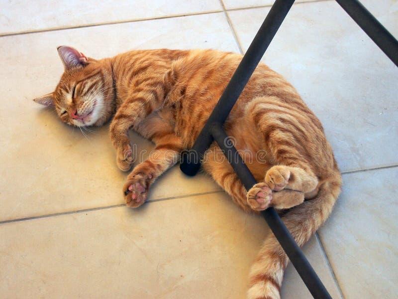 Mycket feta och lyckliga Ginger Tabby Ally Cat royaltyfri fotografi