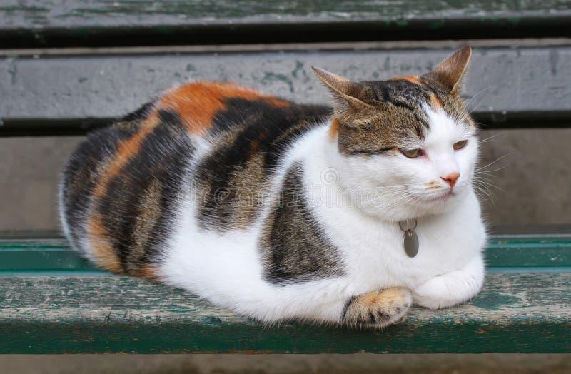 Mycket fluffig katt royaltyfri bild