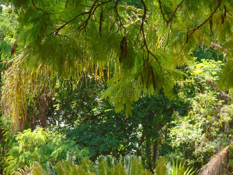 Mycket gräsplansidor royaltyfri foto