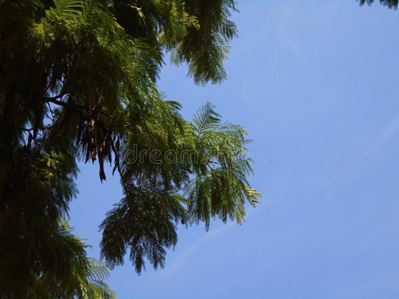 Mycket gröna sidor och himlen royaltyfria bilder