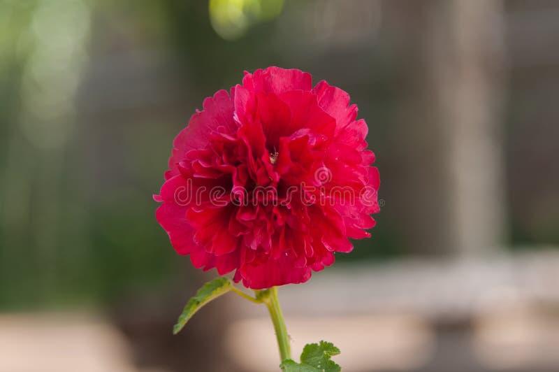Mycket härlig blomma arkivfoton