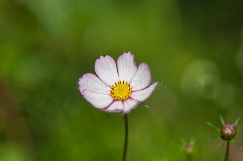 Mycket härlig blomma fotografering för bildbyråer