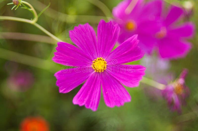 Mycket härlig blomma royaltyfria foton