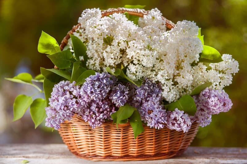 Mycket härlig korg av vita och purpurfärgade lilor royaltyfri bild