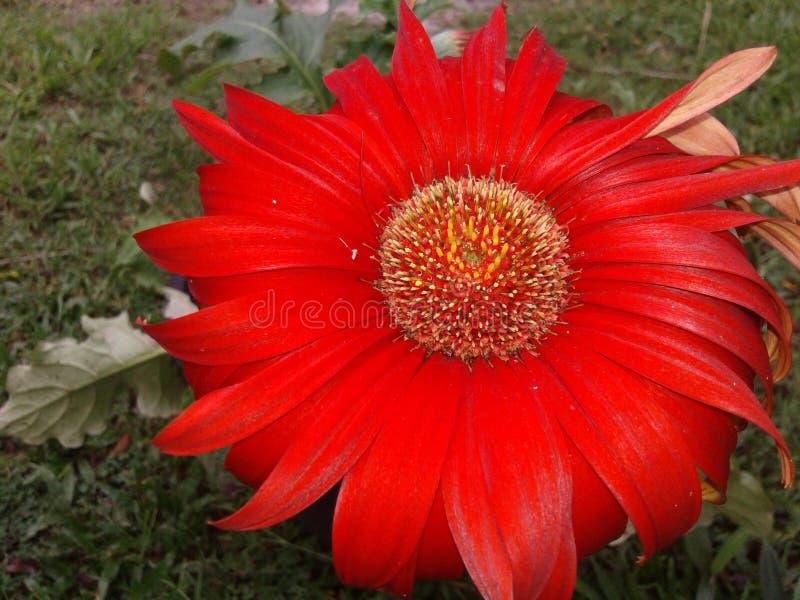 Mycket härliga blommor arkivfoto