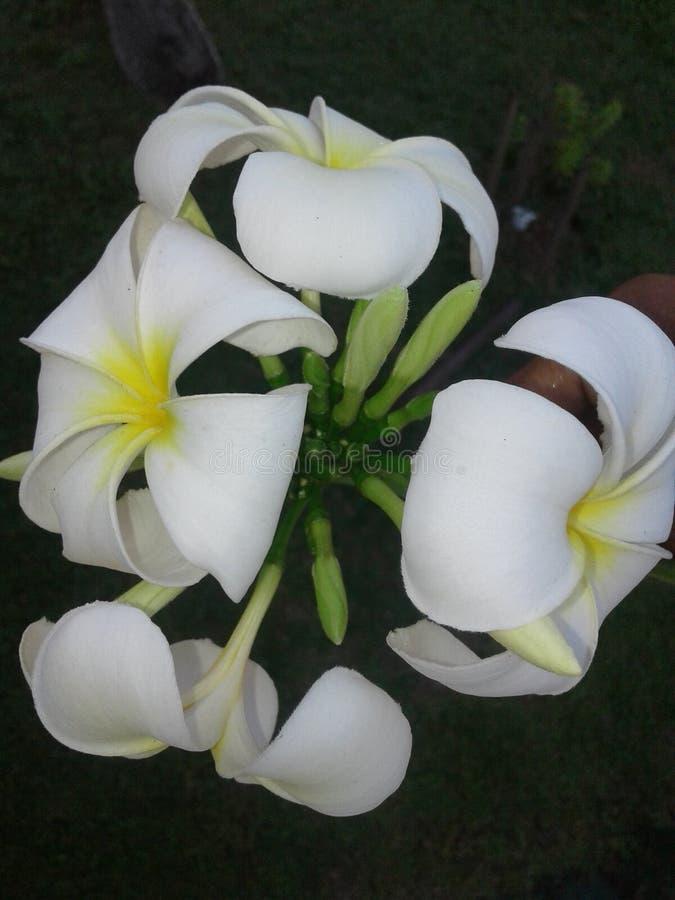 Mycket härliga blommor royaltyfri bild