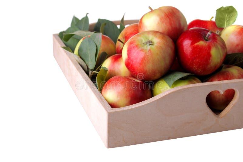 Mycket härliga mogna nya äpplen på ett magasin på en vit isolerade bakgrund royaltyfri bild