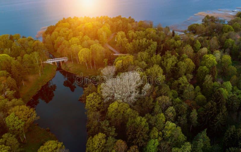 Mycket härligt flyg- landskap av skogen och sjön royaltyfria bilder