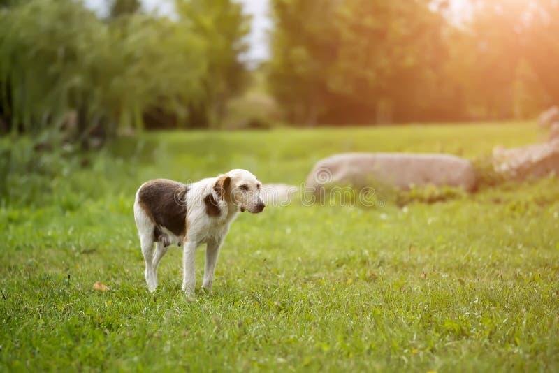 mycket hungrig hund med ledsna ögon arkivbild