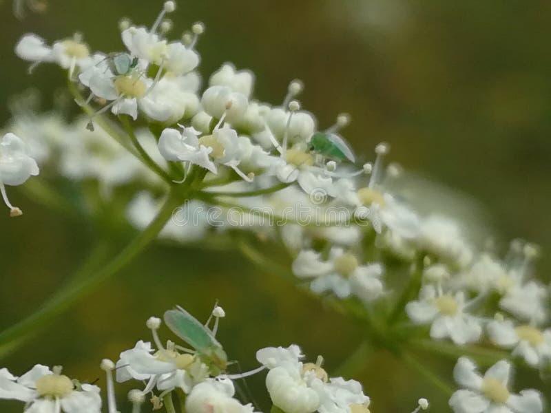 Mycket kall blomma arkivbilder