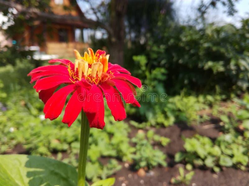 Mycket kall blomma fotografering för bildbyråer