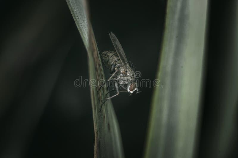 _ mycket liten fluga royaltyfri bild