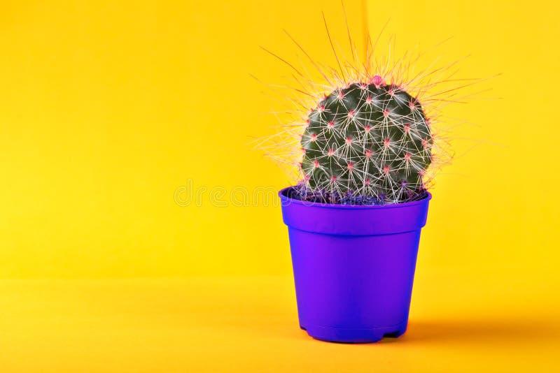 Mycket liten kaktus i krukan på ljus neonbakgrund Genomdränkta Imag arkivfoton