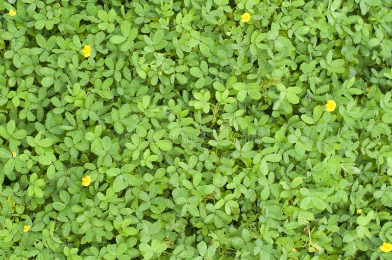 mycket liten leavesväxttextur royaltyfri foto