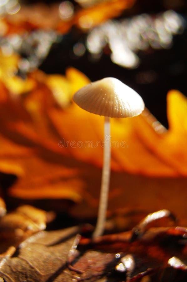 mycket liten skogchampinjon royaltyfri fotografi