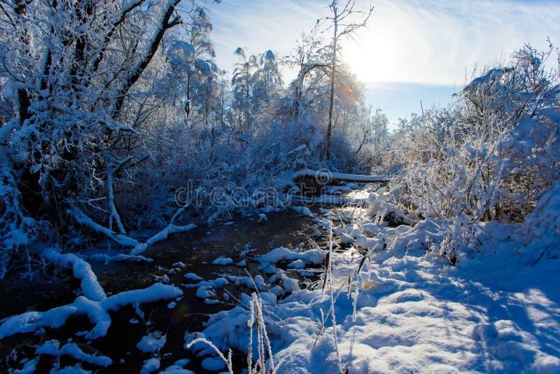 Mycket liten ström som flödar längs snöig trän på solig dag fotografering för bildbyråer