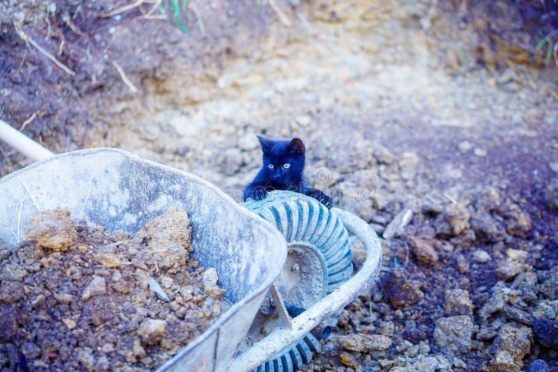 mycket liten svart pott som spelar med den trädgårds- skottkärran royaltyfri foto