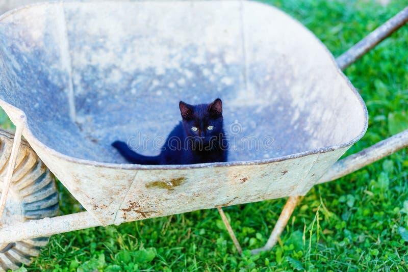 mycket liten svart pott som spelar med den trädgårds- skottkärran royaltyfria bilder