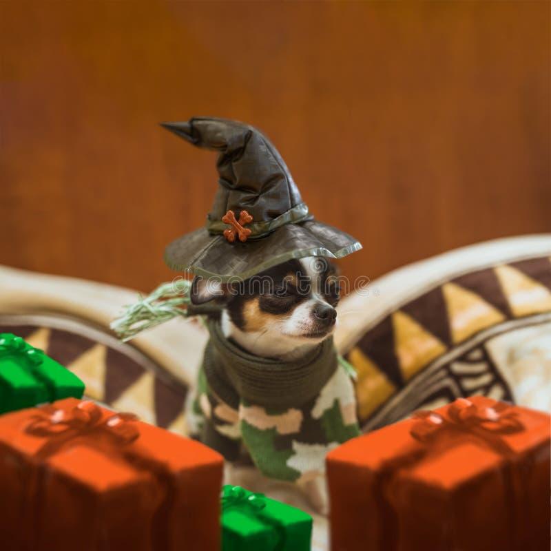 Download Mycket Liten Valp Som Sitter Bära SAD En Häxas Hatt- Och Gåvaaskar Runt Om Honom Halloween Lycklig Vykort Stock Illustrationer - Illustration av festival, händelse: 78727670