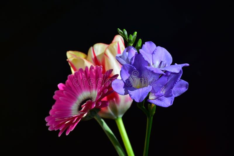 Mycket nätt färgrik gerber, tulpan och freesia i solskenet royaltyfri fotografi