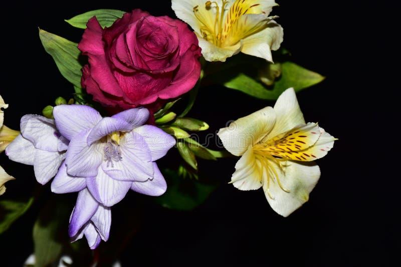 Mycket nätta flerfärgade blommor stänger sig upp royaltyfria foton