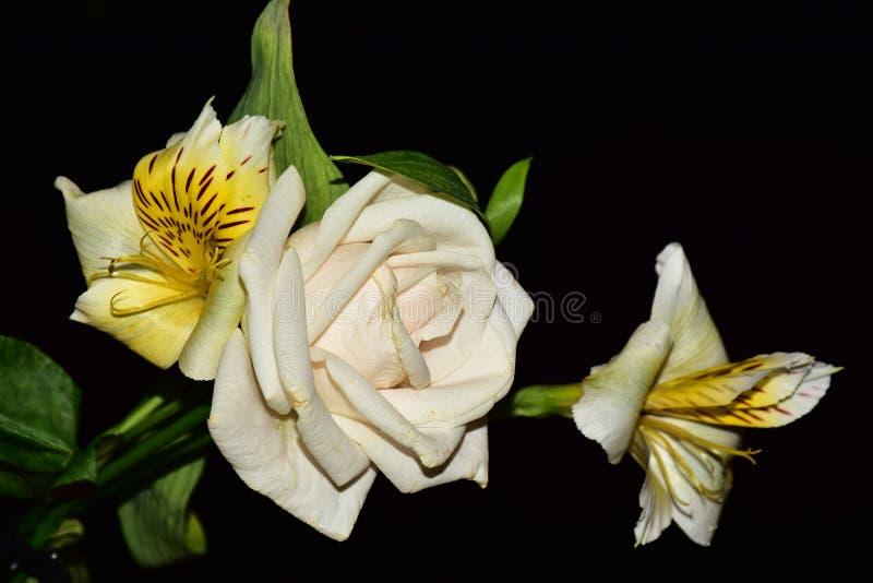Mycket nätta flerfärgade blommor stänger sig upp arkivfoton