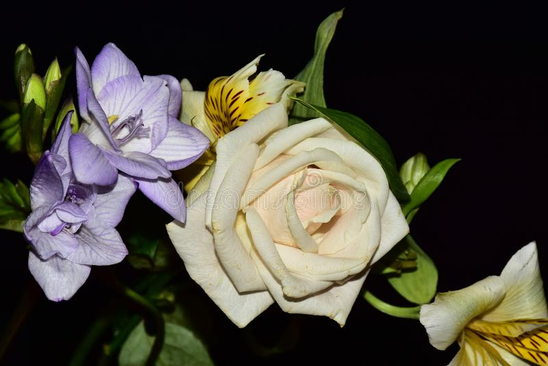 Mycket nätta flerfärgade blommor stänger sig upp royaltyfri bild