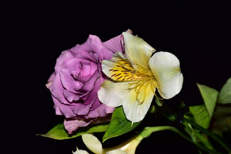 Mycket nätta flerfärgade blommor stänger sig upp fotografering för bildbyråer
