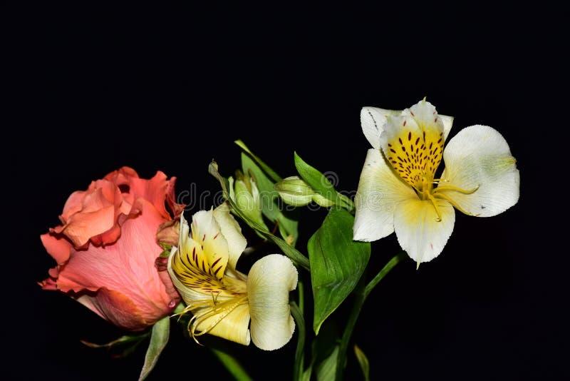 Mycket nätta flerfärgade blommor stänger sig upp royaltyfri foto