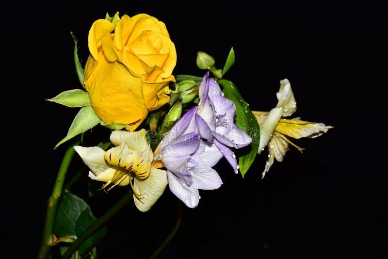 Mycket nätta flerfärgade blommor stänger sig upp royaltyfri fotografi