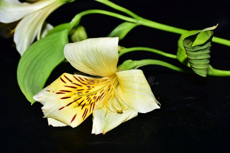 Mycket nätta flerfärgade blommor stänger sig upp royaltyfria bilder